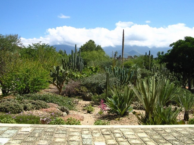 The traveling gardenerjardin ethnobotanical celebrates for Jardin oaxaca