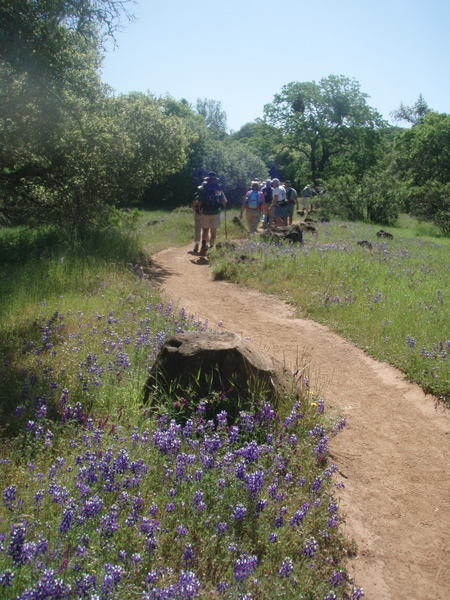 Oakmont Hikers wildflowers