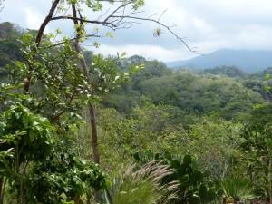Puerto Vallarta Garden