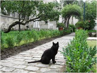 The museum's resident black cat appears straight out of a Steinlen poster.