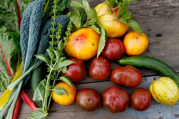 Kate Frey's garden produces a colorful collection of vegetables.