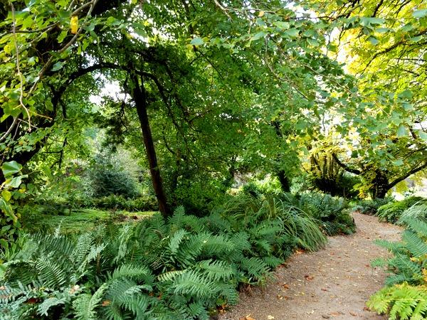Kylemore, Galway Ireland woodland path